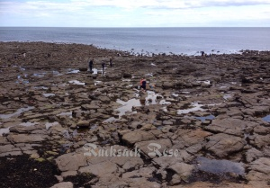 Rockpooling on the coast near Whitley Bay