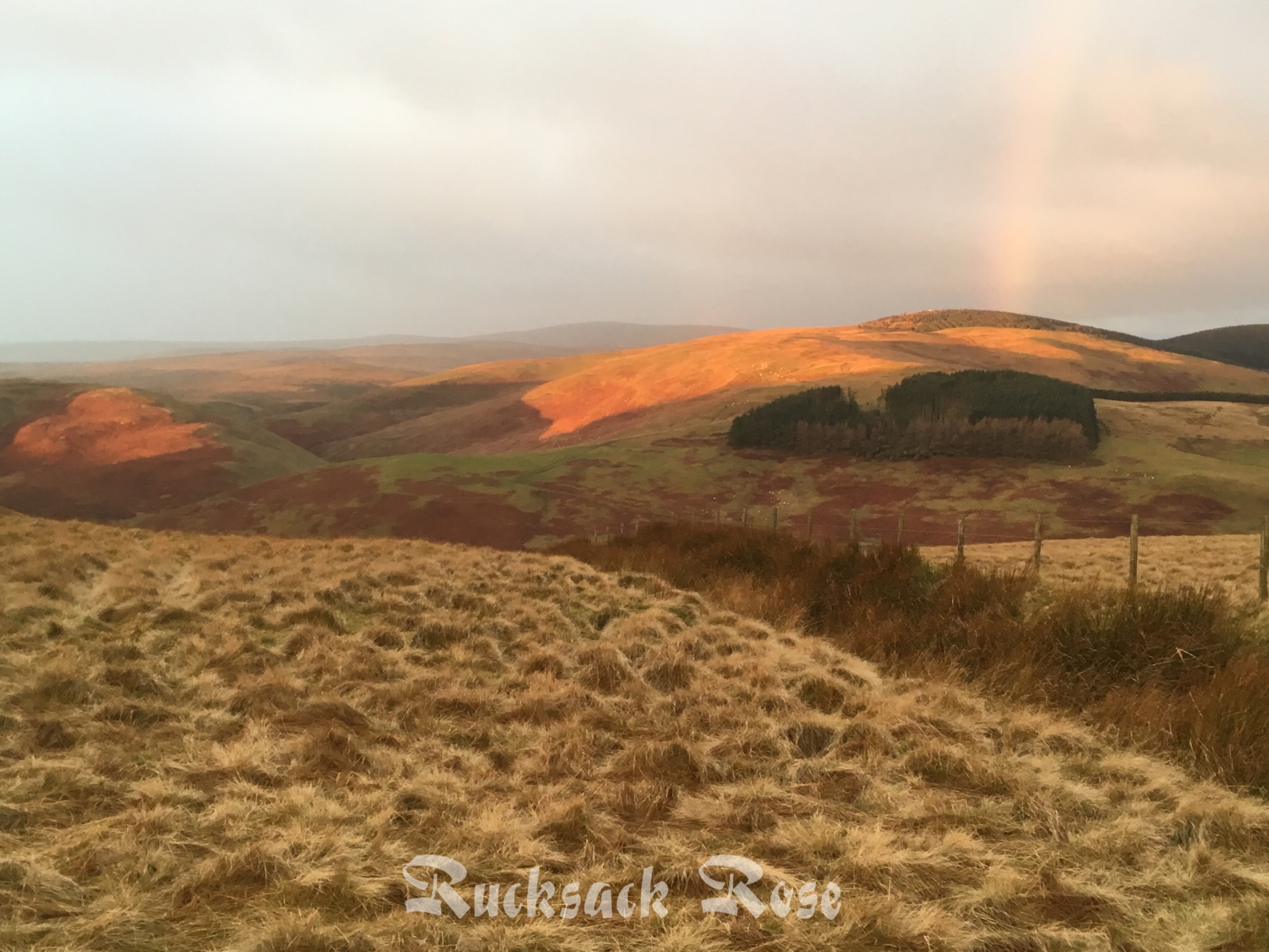 Sunrise from Shillhope Law