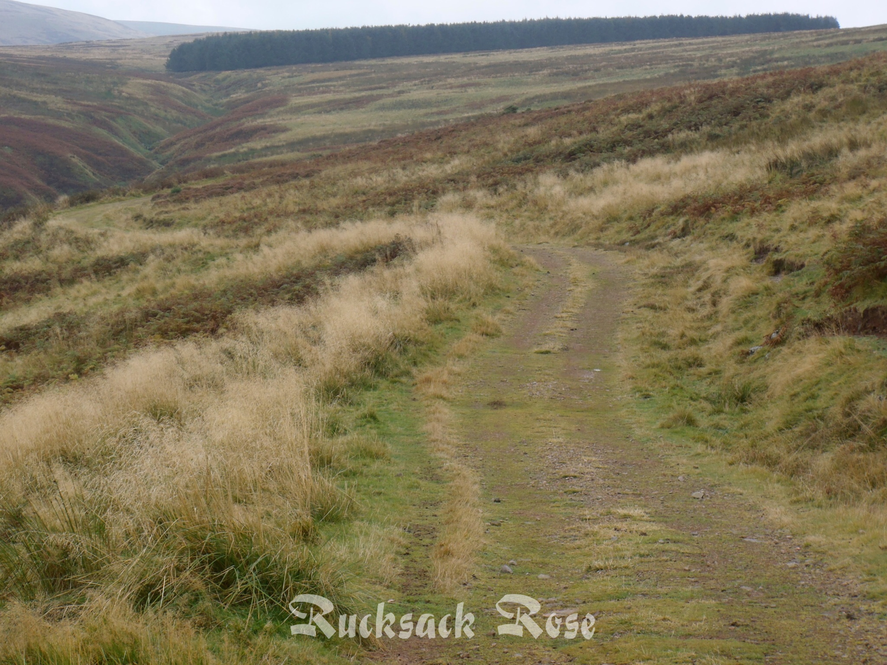 Path to SCW