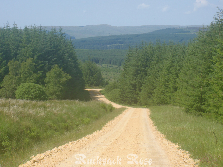 Wark Forest