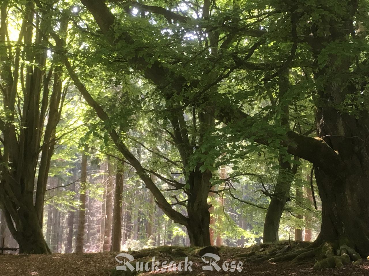 Primrose Woods